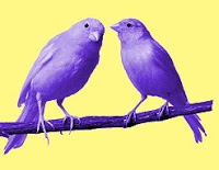 two purple birds